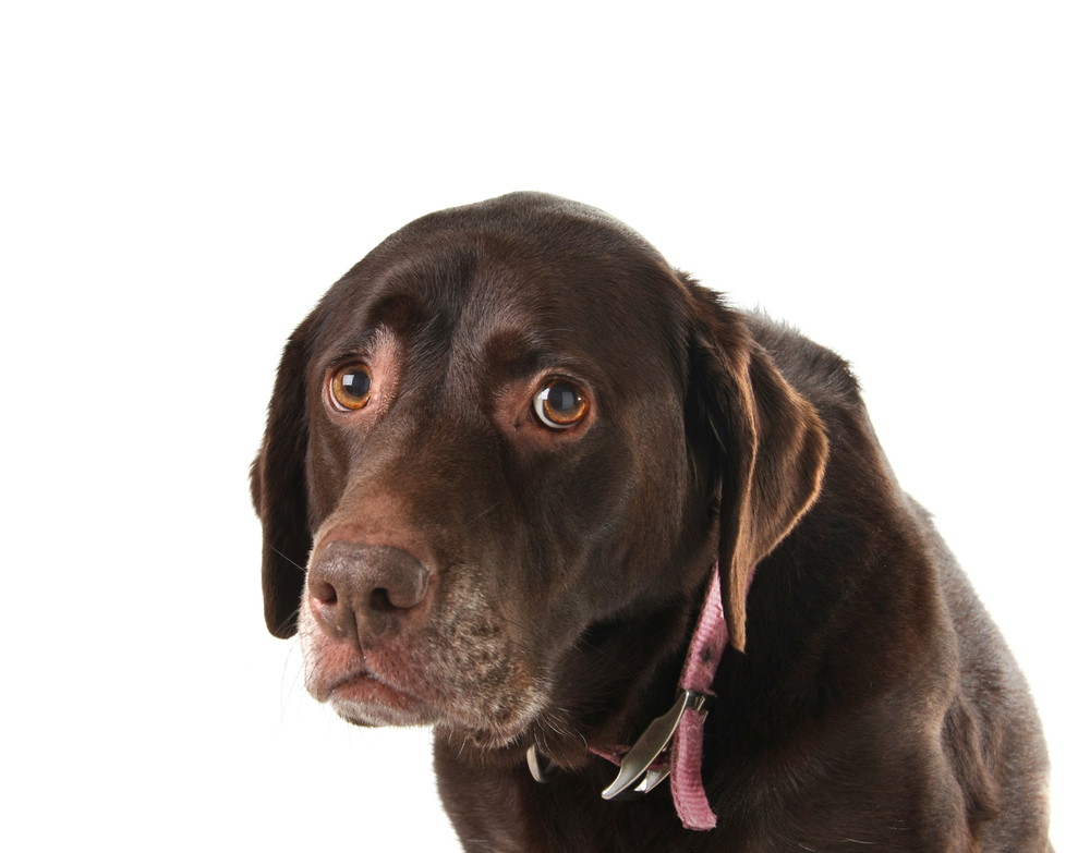 what should i do if my dog is constipated